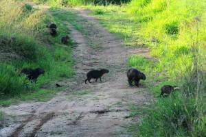 Parque Florestal do Pau Furado nos municípios de Uberlândia e Araguari